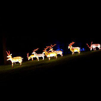 Reindeer, Lantern, Night, Decoration, Light, Decorative