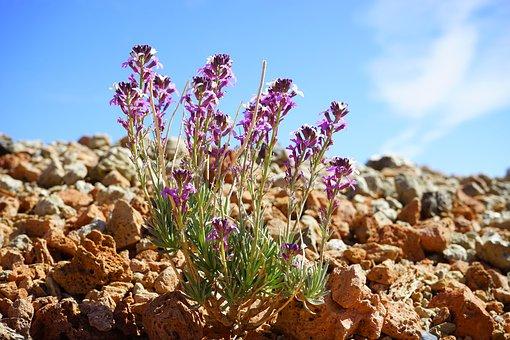 Flower, Flowers, Plant, White, Violet