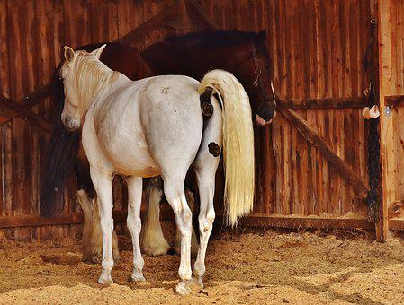 Horses, Stall, Mold, Animal World, Reiterhof, Animal