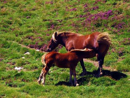 Horses, Prado, Prairie, Green, Nature, Pastures