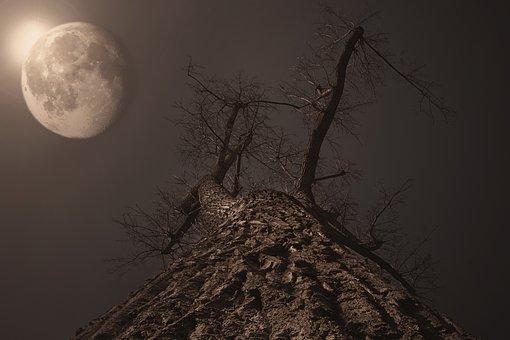 Moon, Tree, Moonlight, Full Moon, Moonrise, Twilight