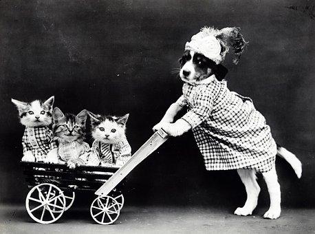 Kitten, Kittens, Cat, Cats, Dog, Puppy, Cute, Dressed