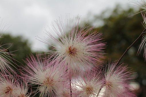 Bottlebrush, Flower, Plant, Flora, Garden, Spring