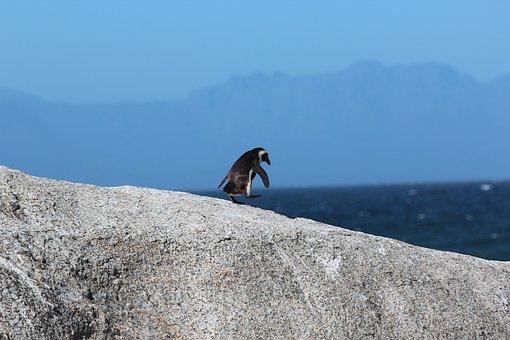Animal, Animal Photography, Ocean, Penguin, Sea, Sky