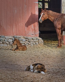 Mare, Foal, Dog, Barn, Horse, Animal, Nature, Equine