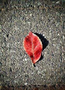 Leaf, Concrete, Red, Plant, Nature, Texture, Cement