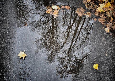 Reflection, Puddle, Asphalt, Autumn, Nature, Trees