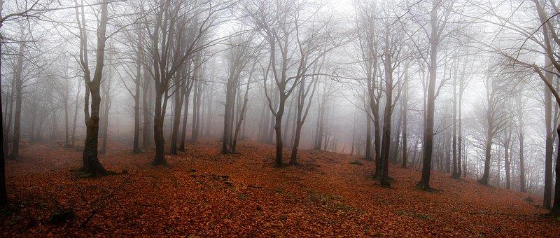 Landscape, Forest, Autumn, Dry, Fogliage, Foliage, Fog