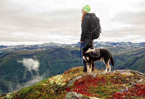 Dog, Mountains, Hiking, Norway, Landscape, Winter