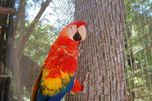 Parrot, Ave, Animals, Macaw, Color, Bird, Cage, Peak