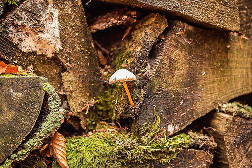 Small Mushroom, Holzstapel, Old Wood, Wood, Nature, Old