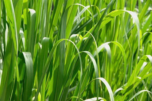 Resolution, High, Macro, Grass, Landscapes, Nature