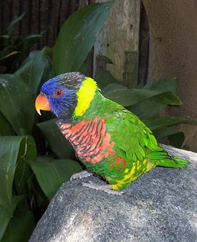 Bright, Colorful, Parrot, Zoo, High, Resolution, Photo