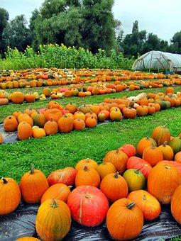 Late Summer, Autumn, Nature, Plant, Pumpkin, Gourd