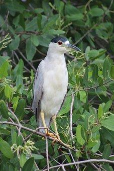 Bird, Wildlife, Back And White, Penguin, Acapulco