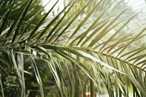 Blur, Branch, Close-up, Evergreen, Focus, Garden