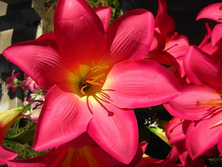 Flower, Lily, Acapulco, Lilly, Floral, Bouquet, Plant