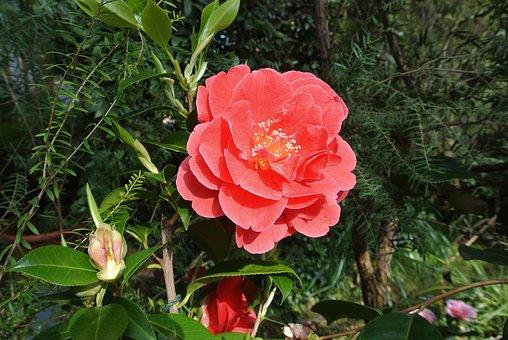 Cologne, Flora, Red, Plant, Park, Flower, Color, Bloom