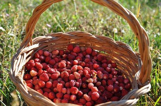Strawberry, Basket, Summer, Forest, Green, Zoom