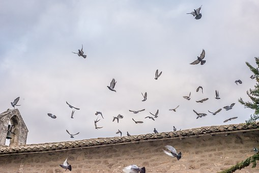 Pigeons, Fly, Church, Bird, Nature, Wing, Animal World