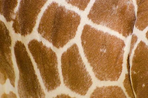 Skin, Pattern, Profile, Isolated, Neck, Tropical