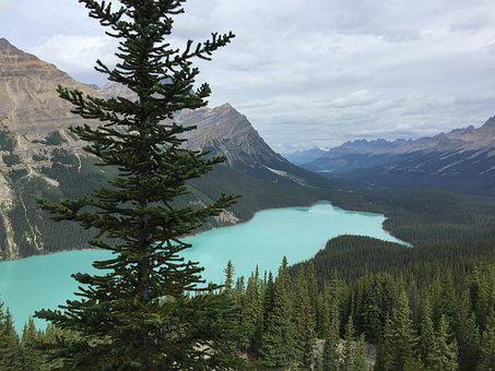 Peyto Lake, Canada, La, Lake, Alberta, Park, Peyto