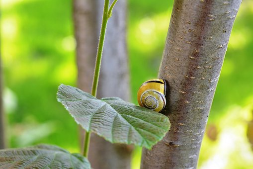 Snail, Seashell, Shell, Hazel, Green, Loneliness