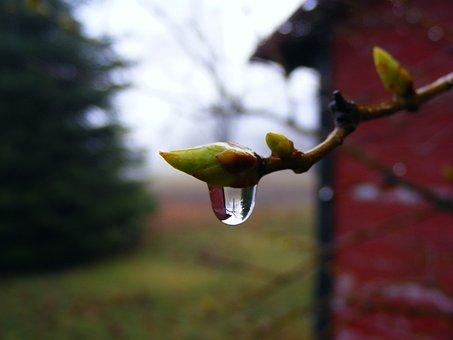 Droplet, Freshness, Macro, Morning, Water, Raindrop