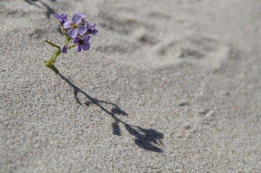 Sand, Beach, Vegetation, Flora, Flower, Small, Lonely