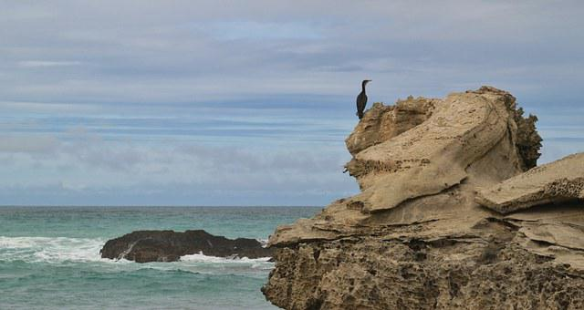 Cormorant, Bird, Water Bird, Coast, Animal, Water, Sea