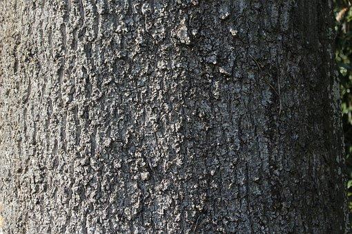 Tree Bark, Forest, Tree, Baustamm, Structure, Detail