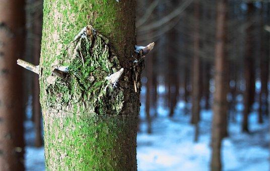 Tree, Forest, Snow, Winter, Nature, Baustamm, Green