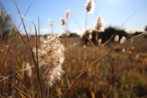 Fields, Dry Grass, Blue Sky, Dry, Reed, Landscape