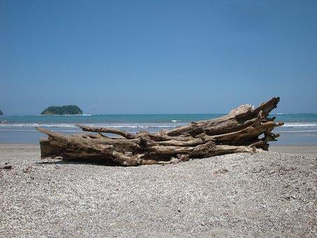 Costa Rica, Pacific, Beach, Wood, Baustamm, Sea