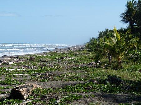 Pacific, Costa Rica, Beach, Wood, Baustamm, Sea