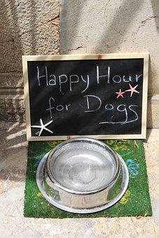 Food Bowl, Fressnapf, Metal Bowl, Dog Food, Dog, Board