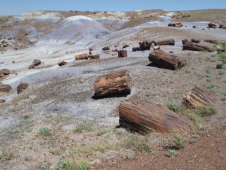 Petrified, Petrified Wood, Opal Wood, Fossil Wood