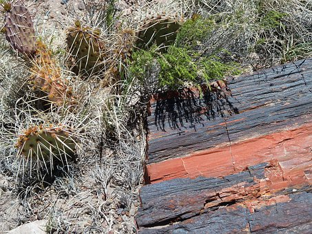 Petrified Forest National Park, Arizona, Usa, Erosion