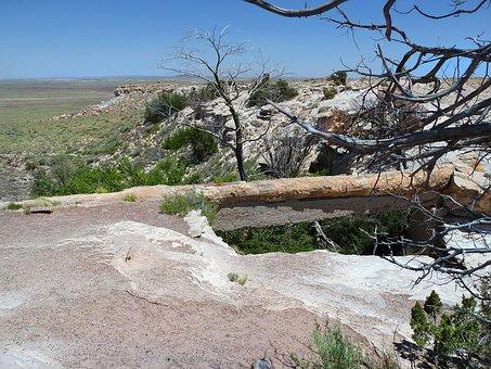 Petrified, Wood, Petrified Wood, Opal Wood, Fossil Wood
