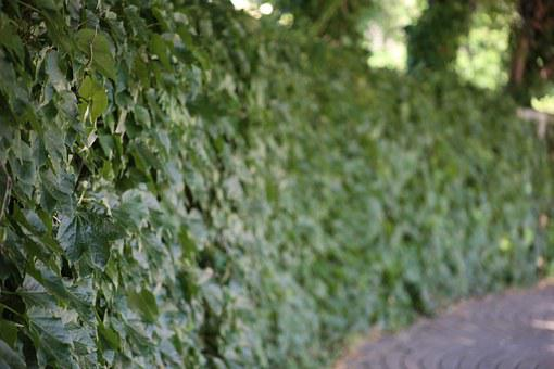 Hedge, Green, Trees, Outdoors, Landscape, Leaves