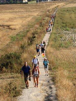 Camino Santiago, Galicia, Pilgrim, Path, Landscape