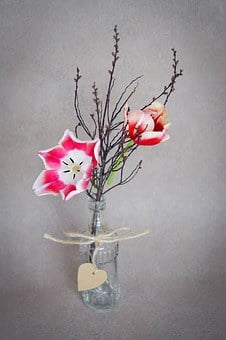 Flowers, Tulips, Pink White, Branch, Twig, Vase