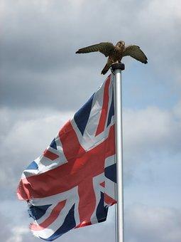 Patriotic, British, Eagle, Flag, Freedom, Wildlife