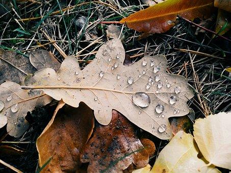 Sheet, Autumn, Drops, Macro, Autumn Leaf, Nature
