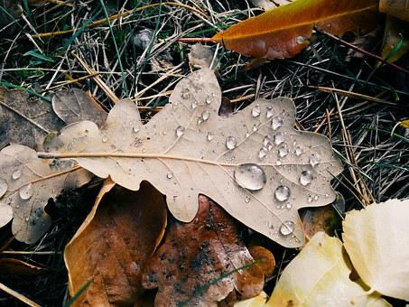 Sheet, Autumn, Drops, Macro, Autumn Leaf, Nature