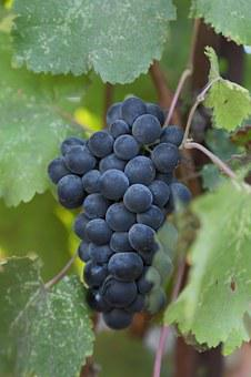 Grapes, Petite Verdot, Wine, Napa Valley, Wine Country