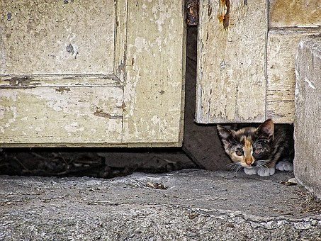 Pet, Background, Wallpaper, Cat, Animal, Door, Kitten