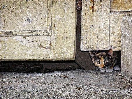 Pet, Background, Wallpaper, Cat, Animal, Door, Kitten