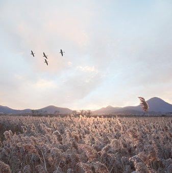 Bird, Sky, Nature, Blue, White, Silhouette, Air, Fly