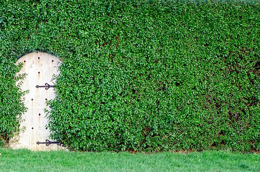 Garden, Green, Bush, Wooden, Close-up, Sunlight